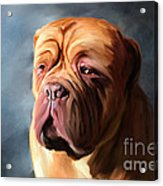 Stormy Dogue Acrylic Print