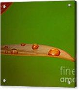 Strategically Placed Raindrops Acrylic Print