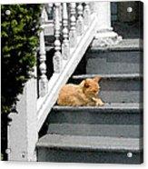Stratford Cat Nap Acrylic Print