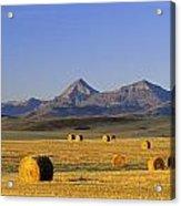 Straw Bales, Pincher Creek, Alberta Acrylic Print