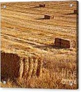 Straw Field Acrylic Print