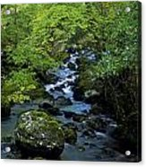 Stream Flowing Through A Forest Acrylic Print