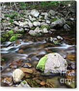 Stream In Nova Scotia Acrylic Print