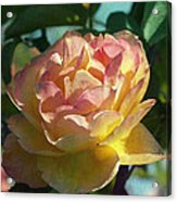 Strike It Rich Rose Acrylic Print