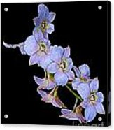 String Of Light Blue Orchids Acrylic Print