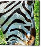 Stripes Acrylic Print