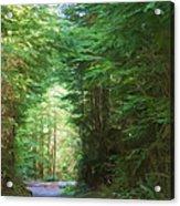 Stroll Through The Quinault Rain Forest Acrylic Print