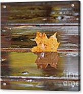 Stuck Maple Leaf Acrylic Print