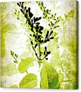 Study In Green Acrylic Print