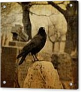 Study Of The Surly Raven Acrylic Print