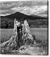 Stump In A Field Acrylic Print