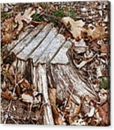 Stumped Acrylic Print