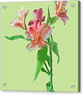 Stylish Florals Acrylic Print
