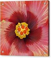 Stylish Photography Acrylic Print