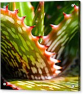 Succulents With Spines Acrylic Print