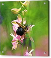 Such A Light Touch Acrylic Print