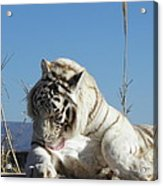 Such Strength And Beauty Acrylic Print