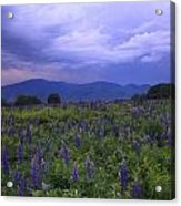 Sugar Hill Lupines Thunderstorm Clearing Acrylic Print