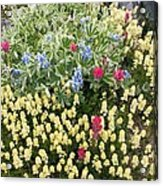 Summer Alpine Flowers Acrylic Print