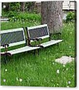 Summer Bench And Dandelions Acrylic Print
