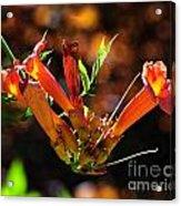 Summer Color Glow Acrylic Print