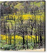 Summer Fields Of The Holy City Acrylic Print