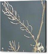 Summer Grass Acrylic Print