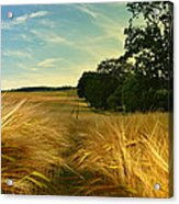 Summer Harvest Acrylic Print
