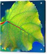 Summer Leaf Acrylic Print