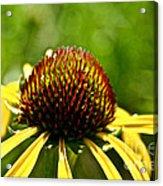 Summer Pins Acrylic Print
