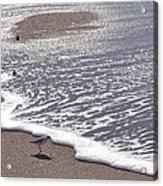 Summer Shimmer Acrylic Print by Cindy Lee Longhini