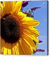 Summer Sunflower Acrylic Print