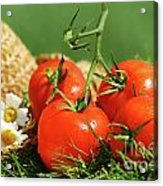 Summer Tomatoes Acrylic Print by Sandra Cunningham