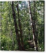 Summer Trail Acrylic Print