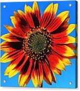 Summerflower Acrylic Print