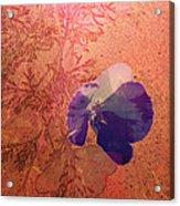 Sun And Shadow Acrylic Print