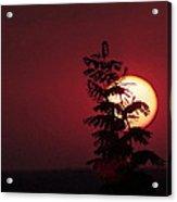 Sun And The Flower  Acrylic Print