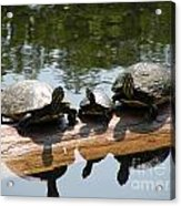 Sun Bathing Acrylic Print