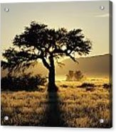 Sun Coming Up Behind A Tree In African Acrylic Print