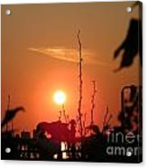 Sun Down Acrylic Print by Laurence Oliver