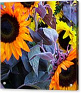 Sun Flower Sunday Acrylic Print