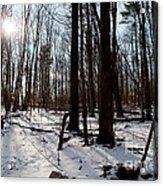 Sun On The Wild Turkey Trail Acrylic Print