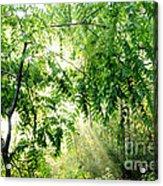 Sun Rays Through Black Walnut Leaves Acrylic Print