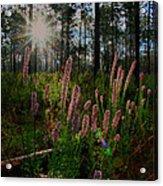 Sunburst On Elegant Liatris Acrylic Print