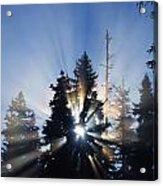 Sunburst Through Silhouetted Pine Trees Acrylic Print