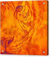 Sunburst Tiger On Fire Acrylic Print