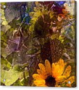 Sunflower 12 Acrylic Print