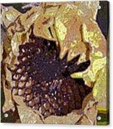 Sunflower 13 Acrylic Print