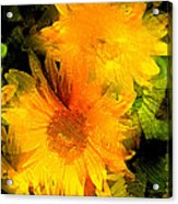 Sunflower 2 Acrylic Print