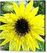 Sunflower 5 Sf5wc Acrylic Print